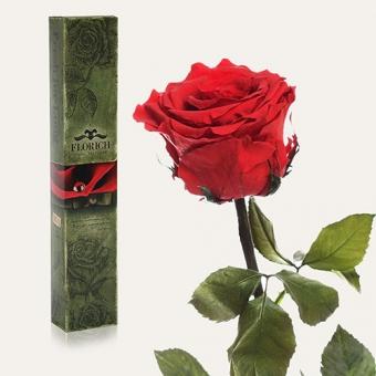 Долгосвежая роза Алый рубин 5 карат на коротком стебле (1115-RD01)