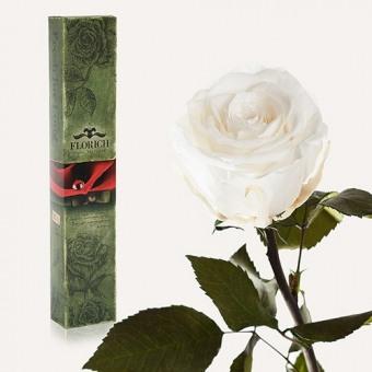 Долгосвежая роза Белый бриллиант 5 карат на коротком стебле (1115-WT01)