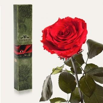 Долгосвежая роза Красный рубин 5 карат на коротком стебле (1115-RD02)