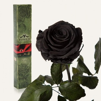 Долгосвежая роза Черный бриллиант 5 карат (1115-BL01)