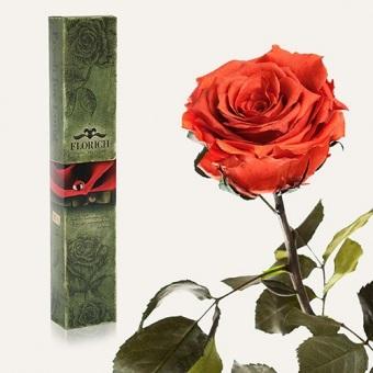 Долгосвежая роза Кофейный топаз 7 карат на коротком стебле (1117-BR01)