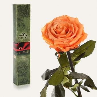 Долгосвежая роза Золотистый хризоберилл 7 карат на коротком стебле (1117-JL03)