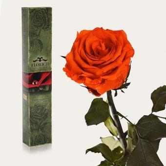 Долгосвежая роза Огненный янтарь 5 карат (1115-OR02)
