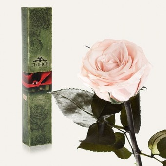 Долгосвежая роза Розовый жемчуг 7 карат (1127-PK01)
