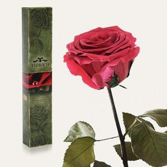 Долгосвежая роза Розовый коралл 7 карат (1127-PK04)