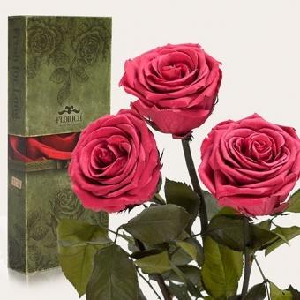 Долгосвежие розы Розовый коралл 7 карат, 3 шт. (1327-PK04)