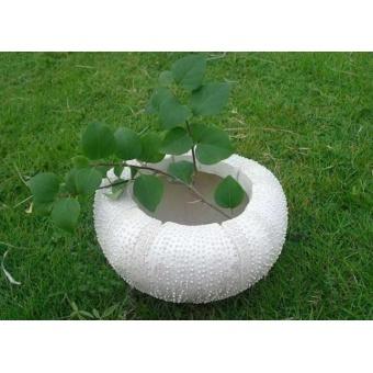Садовое кашпо Перламутровая ракушка